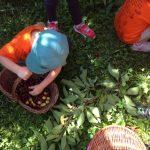campodei frutti 15