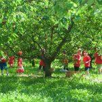 campodeifrutti 11