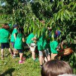 campodeifrutti 17