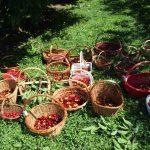 campodeifrutti 18