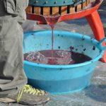 il succo d'uva 2